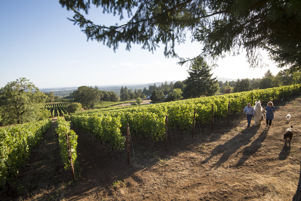 The history behind Allison Oaks Vineyards